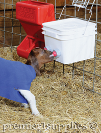 Goat using bucket teat unit