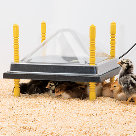 Heating Plates for Chick Brooders