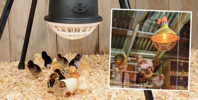 Warm Chicks