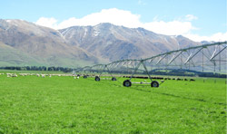 Irrigation in New Zealand
