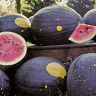 ''Moon and Stars' watermelon