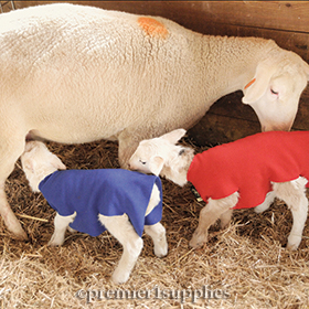 Newborn Lamb & Kid Covers
