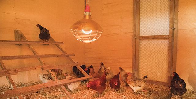Carbon Fiber Chicken Coop Heaters