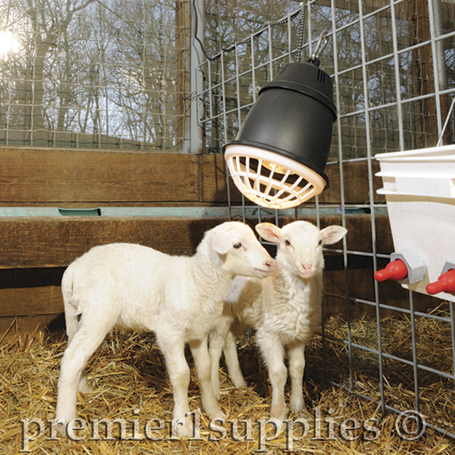 Premier1Supplies com - How to raise orphan lambs and kids