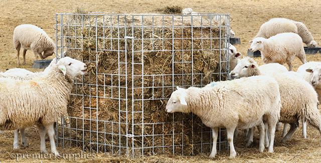 Bale Feeding