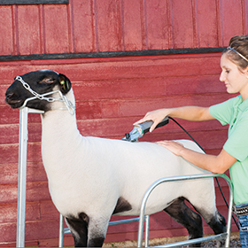 Clipping or Shearing
