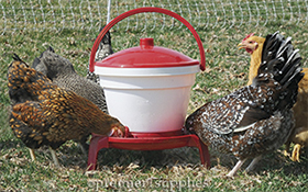 QuickClean Waterer