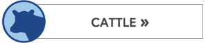 Cattle Button