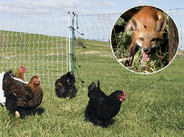 Portable electric fence to protect or contain livestock. Quick to install, durable and adaptable in difficult terrain.