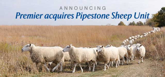 Premier acquires Pipestone Sheep Unit