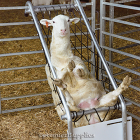Deck Chair for Sheep and Goats