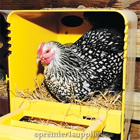 Hen using ChickBox nesting box