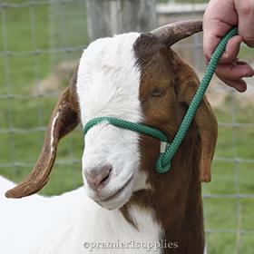 Livestock Halters