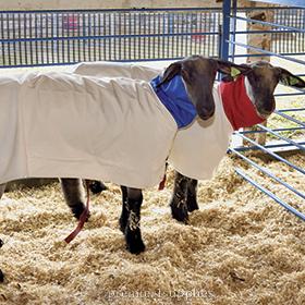 Hoods & Blankets