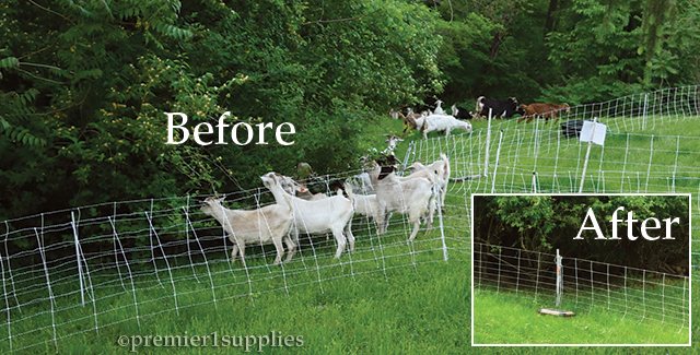 ElectroNet® 9/35/12 is keeping goats contained to an area.