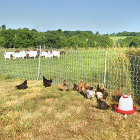 Pos/Neg PoultryNet 12/42/3 with drivable posts