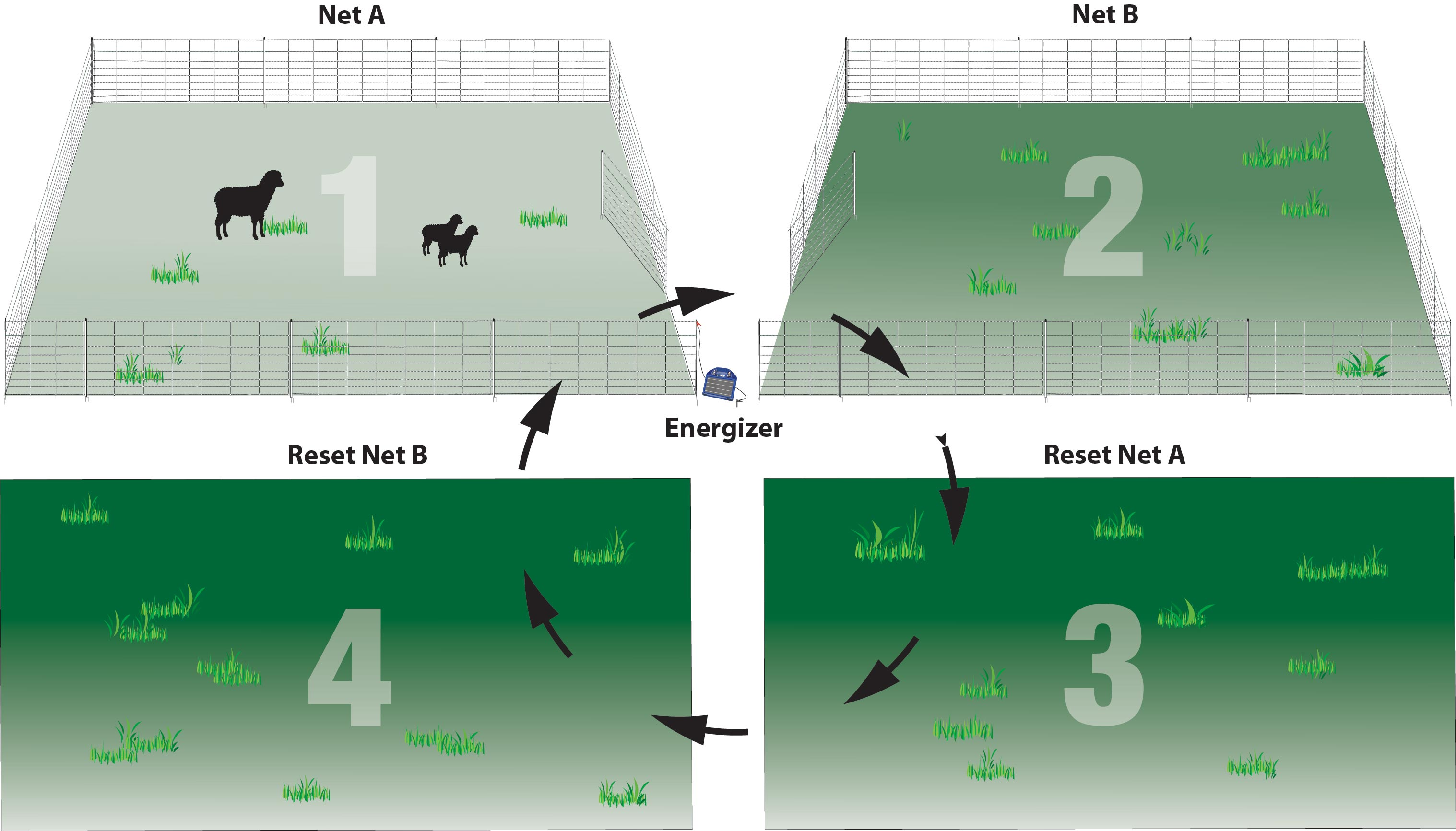 Two net grazing system with multiple paddocks.
