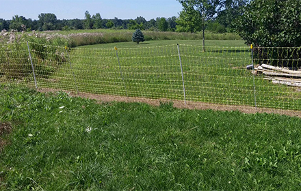 The user had killed the grass under the fence with a herbicide before installing the netting.
