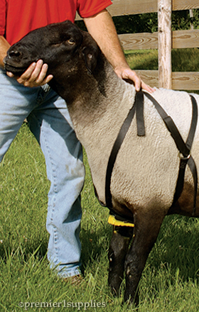 Marking harnesses for sheep and goats.