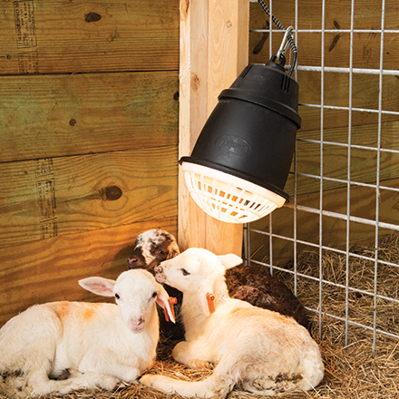 Prima Heat Lamp for Sheep and Goats