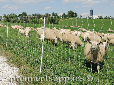 Select The Best Electric Fence Design For Your Sheep - Premier1Supplies