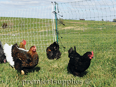 Electric Fence Design Select the best electric fence design for your poultry poultry select the best fence design workwithnaturefo