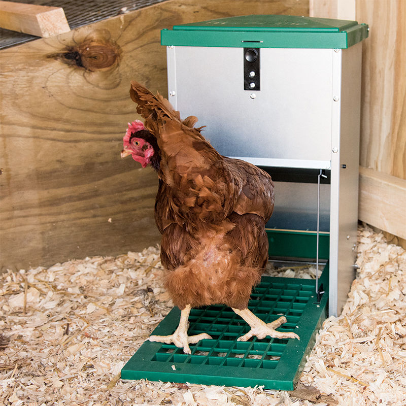 brahma chicken poultry supplies feeders eton feeder hens chickenhouses with plastic eco