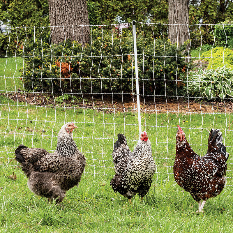 Poultrynet U00ae And Poultrynet U00ae Plus 12  48  3 Electric Netting