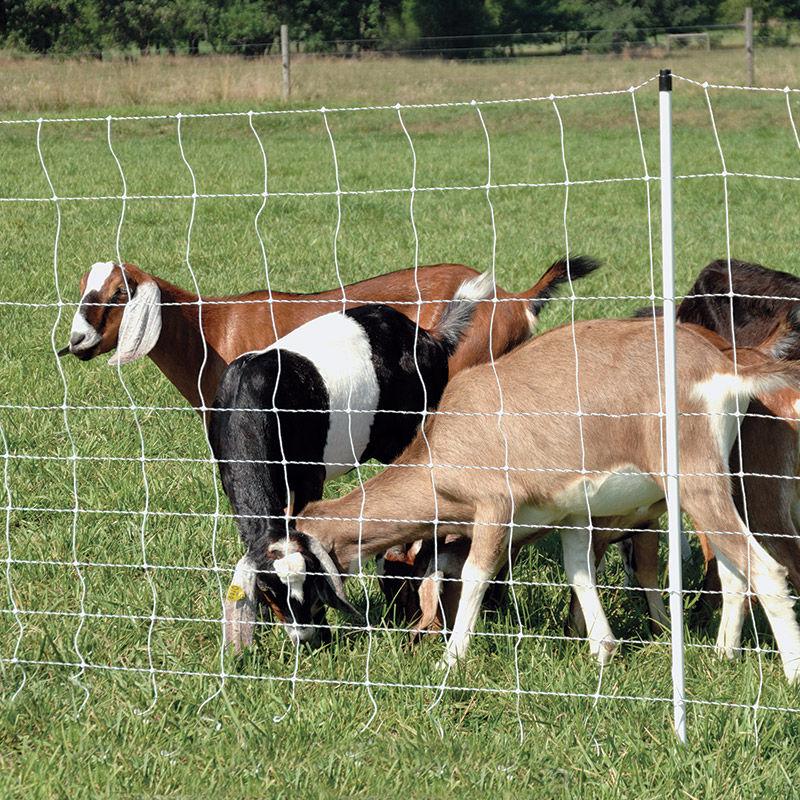 Permanet U00ae 10  48  6 Electric Netting For Goats