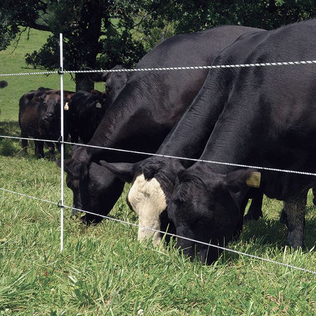 Multi-rope Fences For Cattle