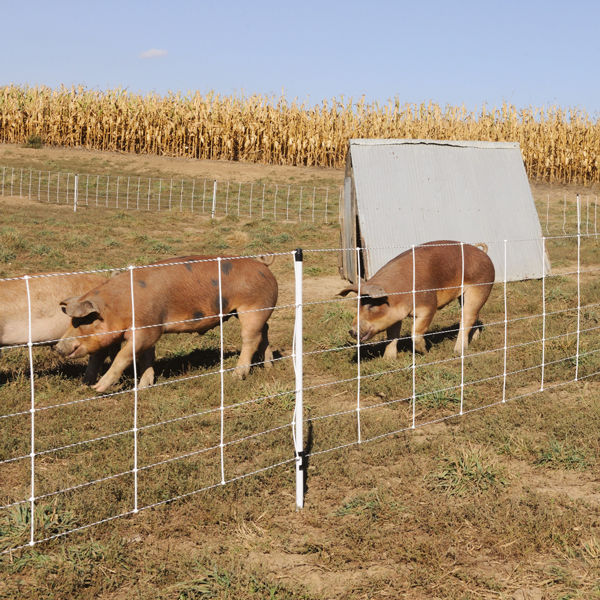 Pig Quikfence 174 6 30 12 Electric Netting Premier1supplies