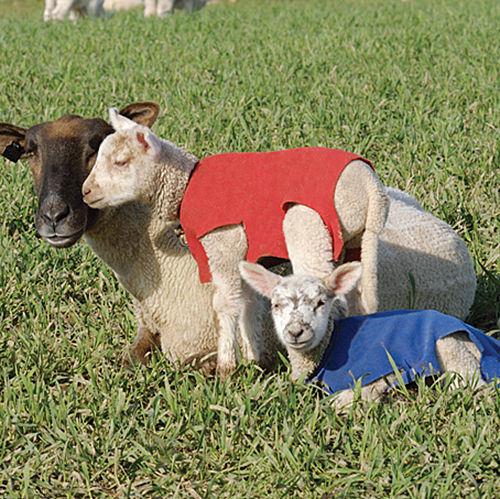 Newborn Lamb Amp Kid Covers Premier1supplies