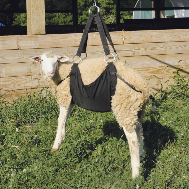 Large Weigh Sling Premier1supplies