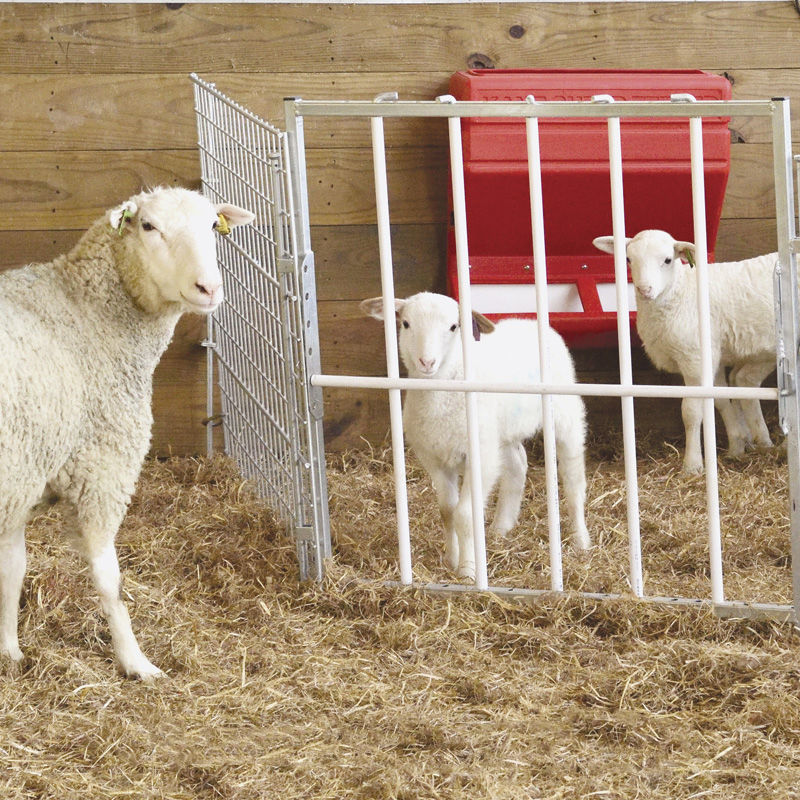 feeder creep hogget feeding agri equipment sheep feedingequipment for feeders