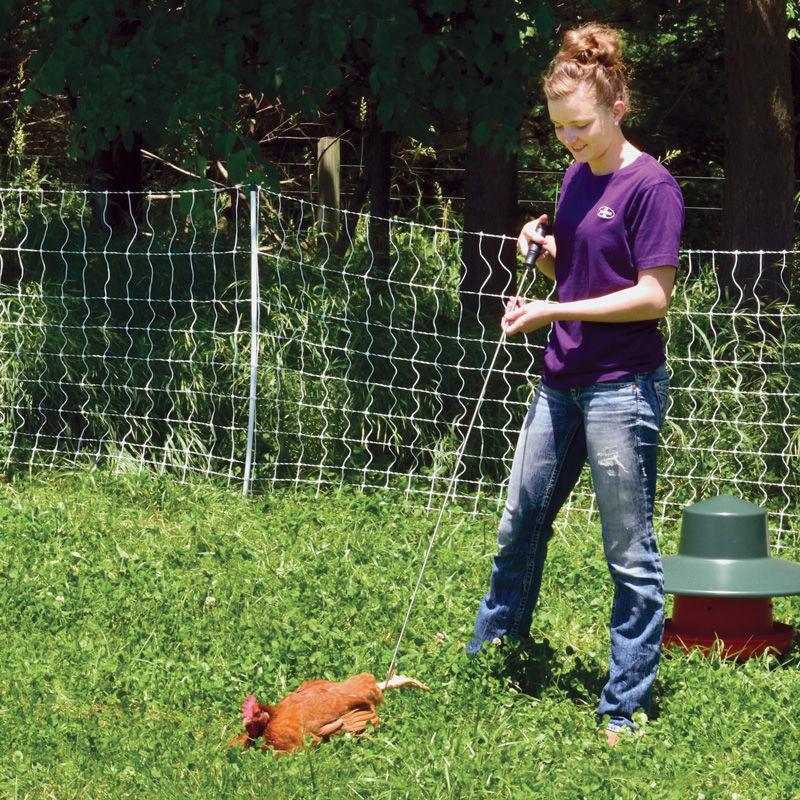 Poultry Hook Premier1supplies