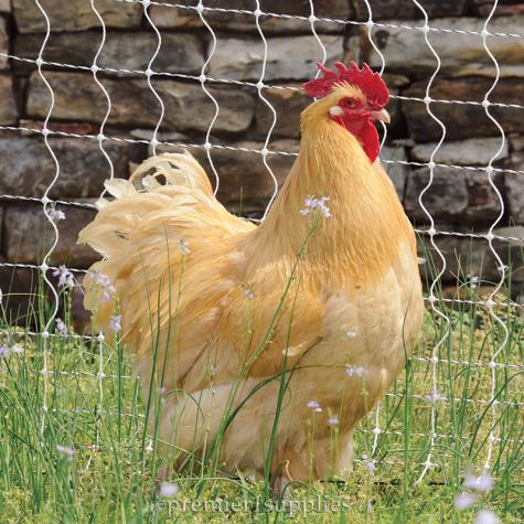 PoultryNet® and PoultryNet® Plus 12/42/3 Electric Netting