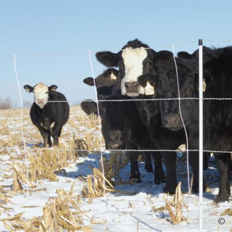 Cattle QuikFence® 4/48/24