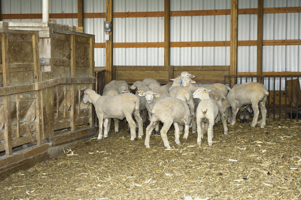 nrc 2007 nutrient requirements of small ruminants pdf