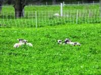 Adv rotational grazing 1