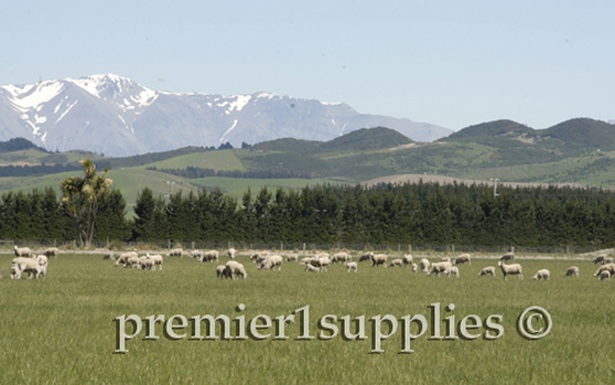 Standing on the Canterbury Plain on sheep pasture looking west to the mountains that run north and south. It's one place that's more beautiful in person than it is in even the best photos.
