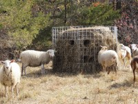 big-bale-feeders-1