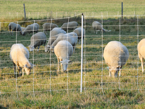 Dry Soil Tips For Electric Fences