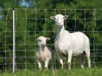 sheeptempfence