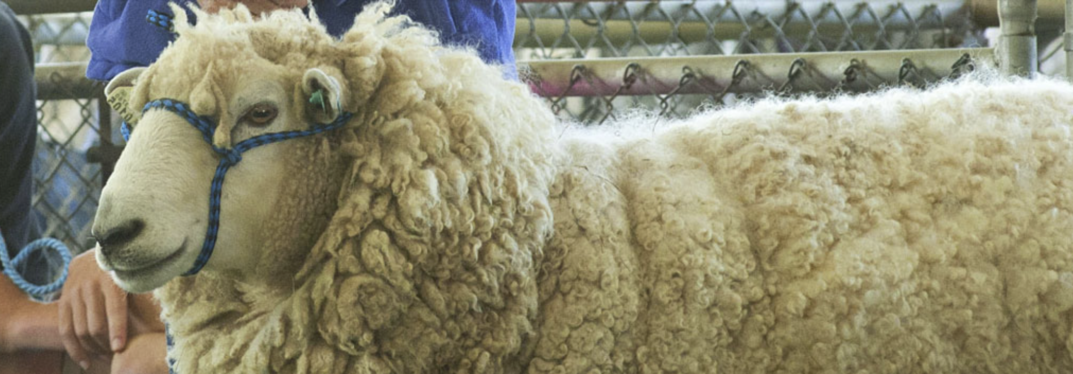 Maryland Sheep and Wool Festival –